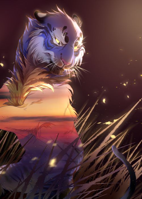 sunset tiger by 灰虎